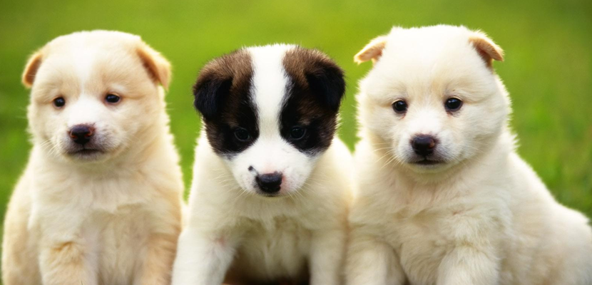 726.dogs_