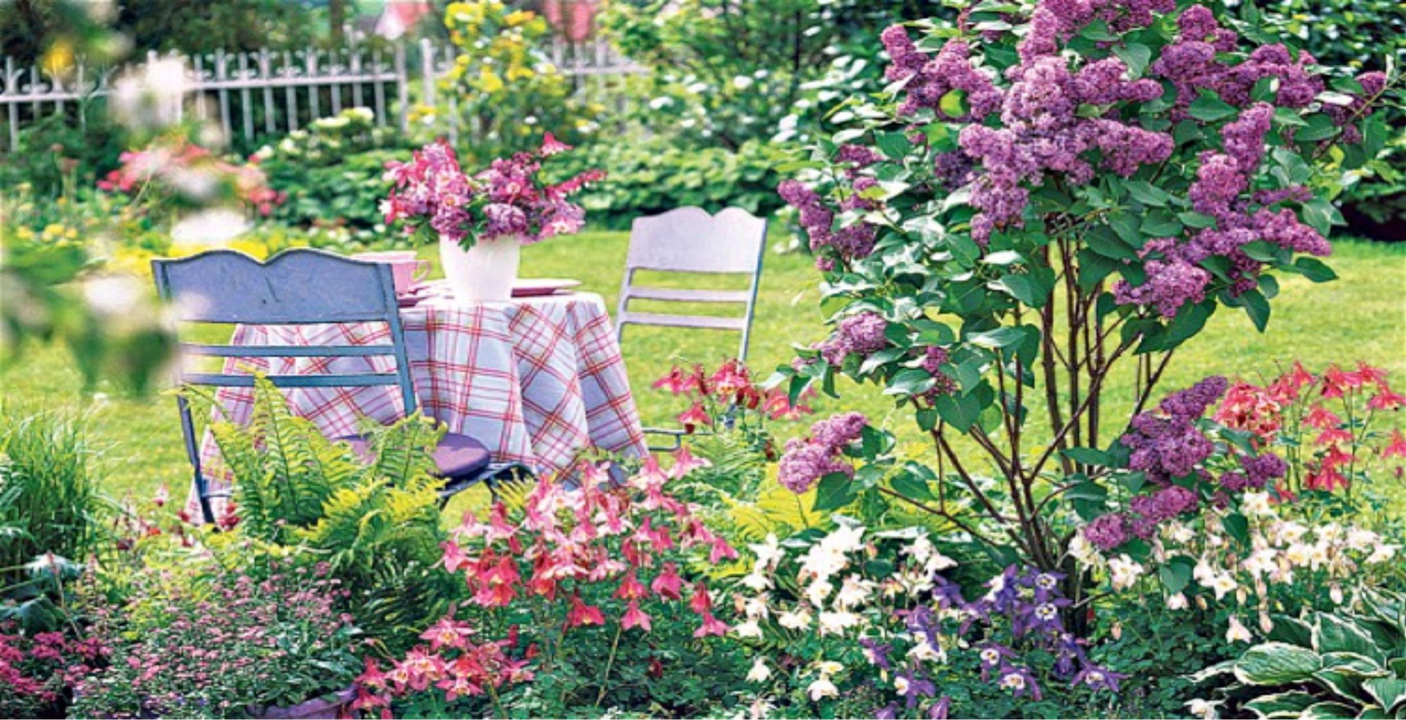 lilac bushes